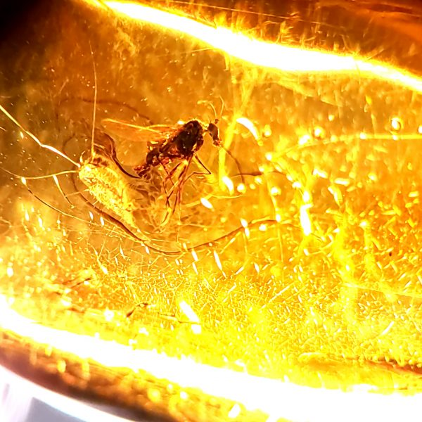 Amber with Fruit Fly Pendant
